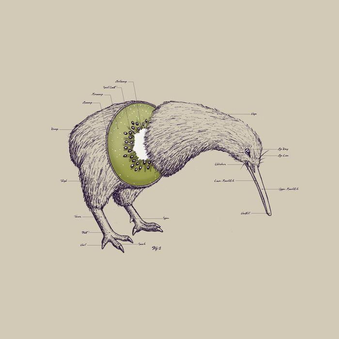 Diagram Of Kiwi Bird - DIY Enthusiasts Wiring Diagrams •