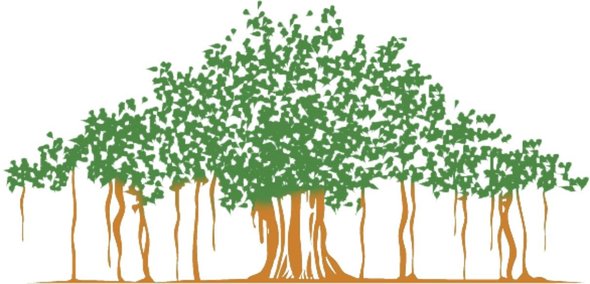 how to draw a simple banyan tree