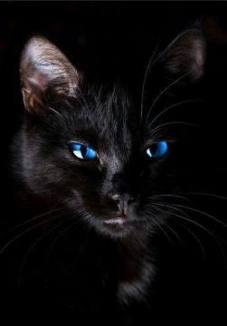 elle mange la chatte noire