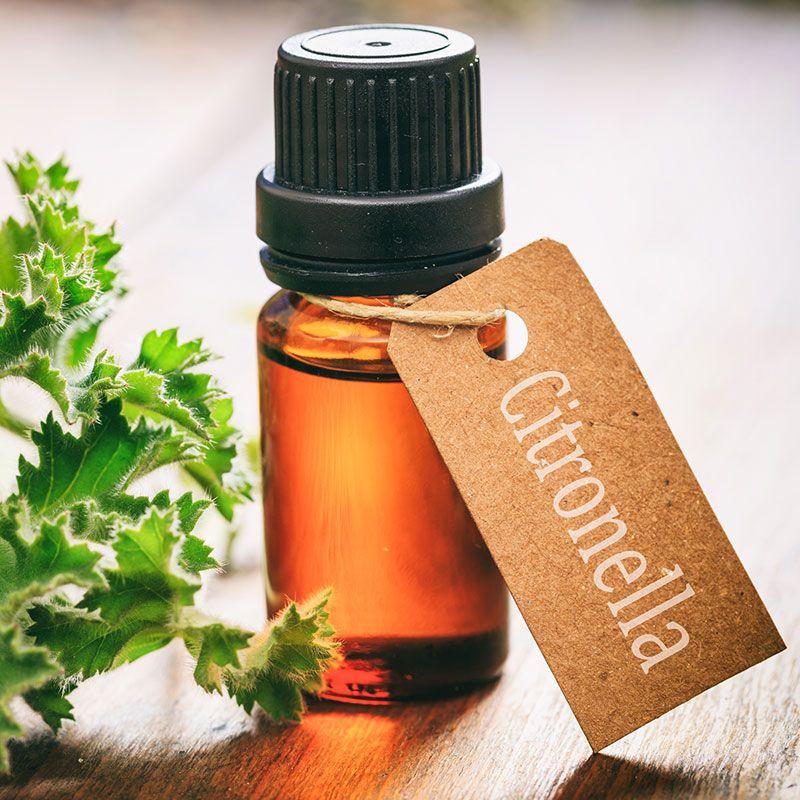 Diy essential oil bug repellent recipe essential oil