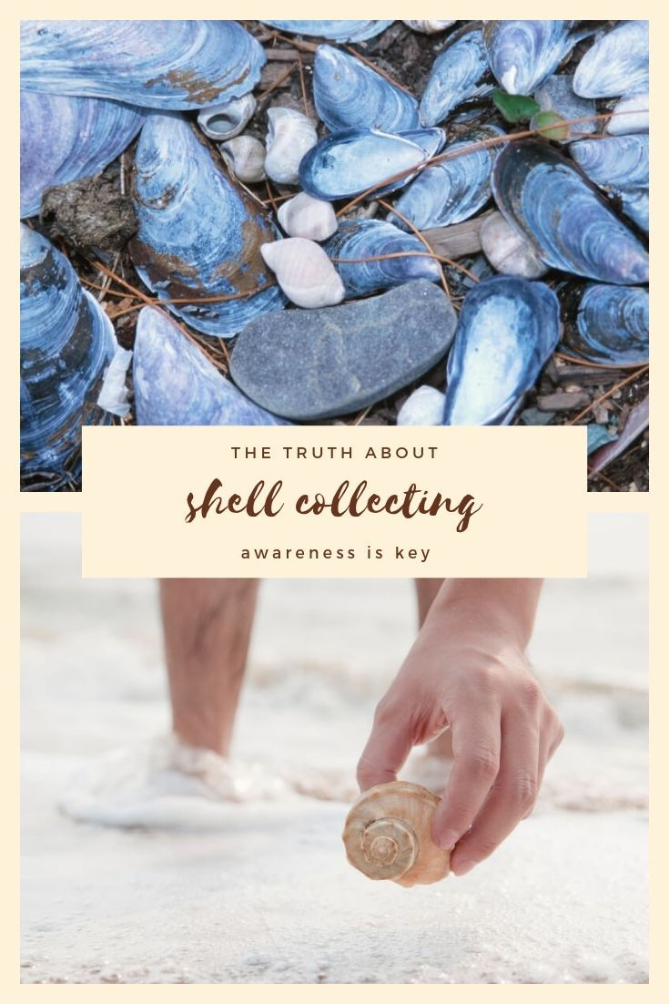 The Truth About Shell Collecting - Crystal L McCann