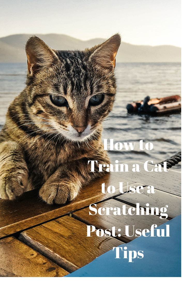 Cat Training Scratching How To Train A Cat To Use A Scratching Post How To Train A Cat To Use A Scratching Post Us Cat Training Cats Cat Training Scratching