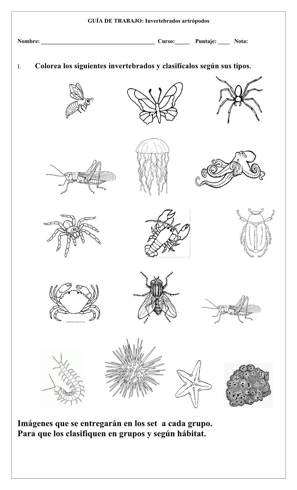 Anexos Invertebrados By Blankitaldga Via Slideshare Vertebrados