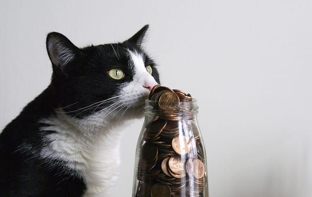 Hoarding Pennies: 8 Ways to Make the Most of the Coins in Your Change Jar