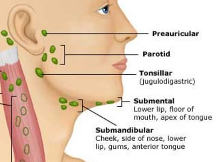 Lymph Nodes On The Jaw And Around The Jawline General
