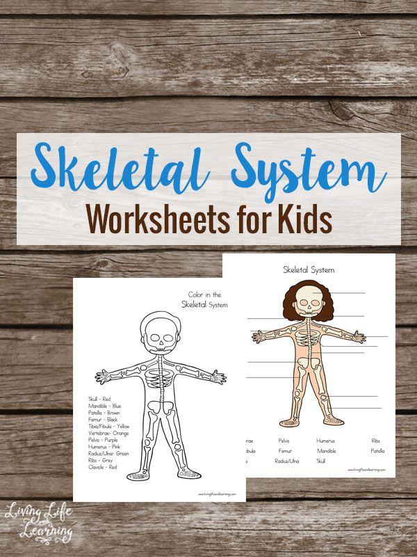 Free Skeletal System Worksheets Homeschooling Printables