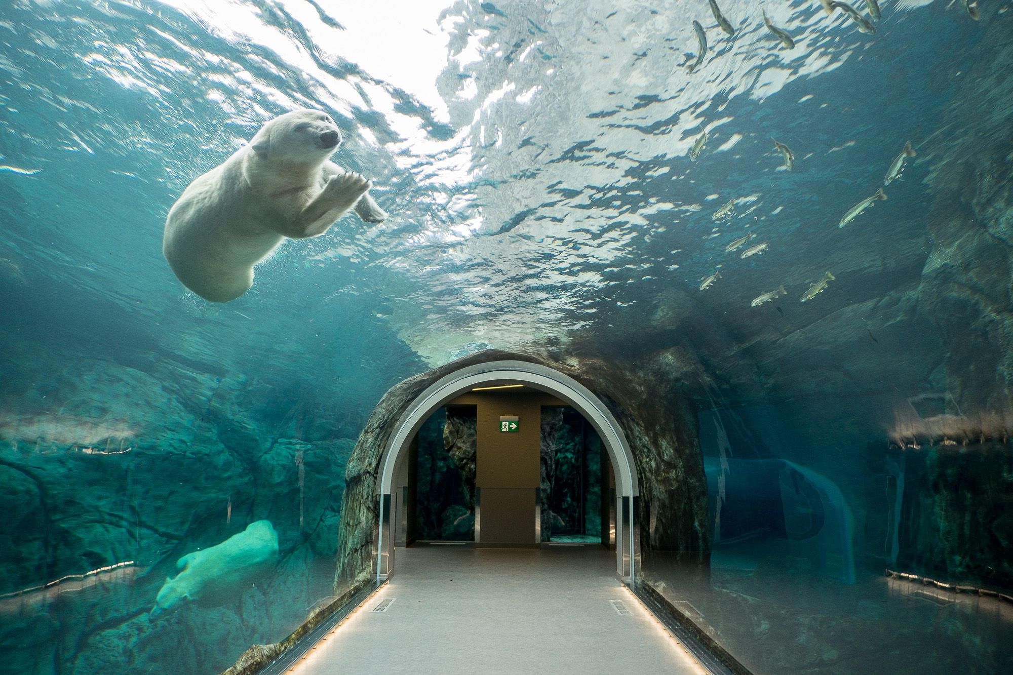 Image result for assiniboine zoo