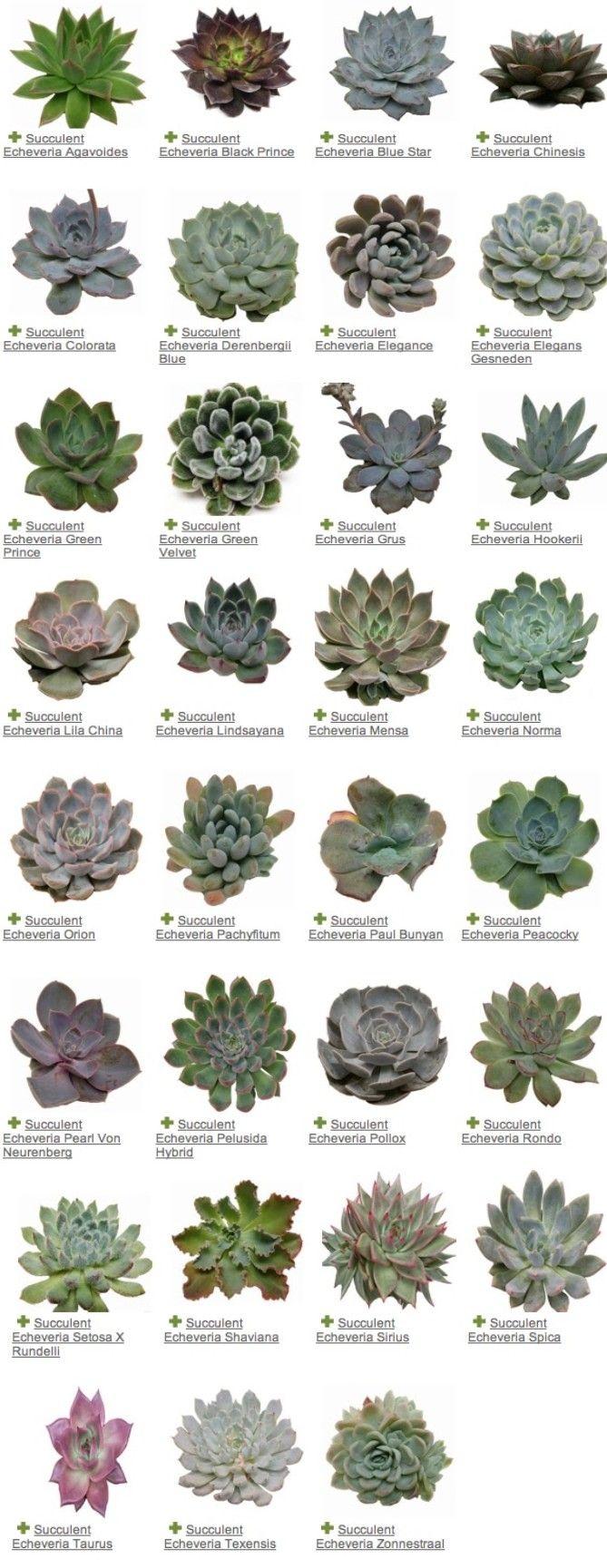 Reconnaître le nom d'une succulente Planting succulents