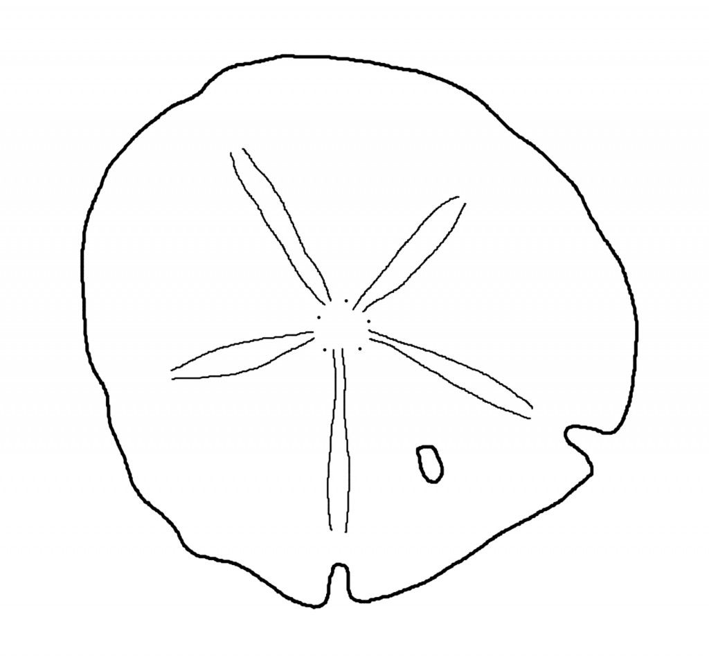 Sand Dollar Outline Jennas B Day Templates Printable Free Sea