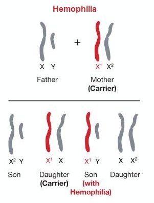 definition Sex linked genetics