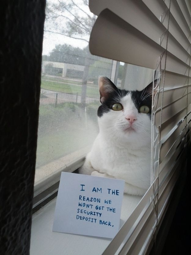 Cat Shaming At Its Best Cat Shaming Bad Cats Funny Cats And Dogs