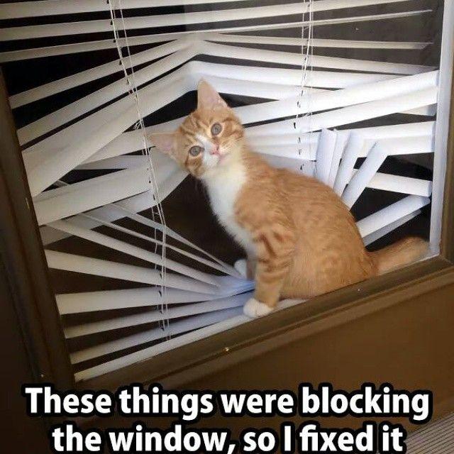40a14452c736c56b5b412d40ed14f81c image result for christmas cat in blinds meme work pinterest