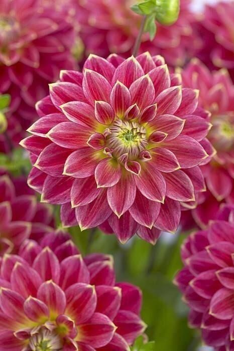 Beautiful flower  - popculturez.com