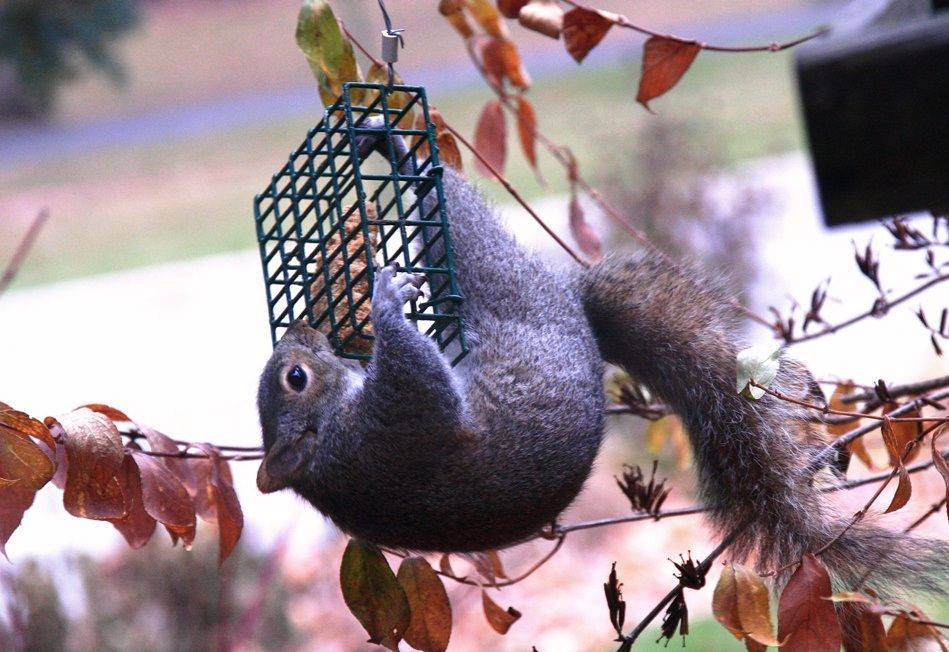 5 Tips to Keep Squirrels Out of Your Bird Feeders Bird