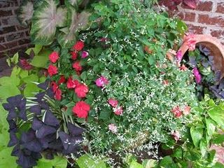 'Diamond Frost'  Euphorbia  Impatiens (or Pentas)  Oxalis (purple)