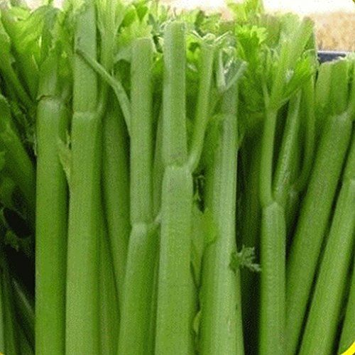Grow Celery In Containers Is A Delicious Vegetable That High Nutritional Value