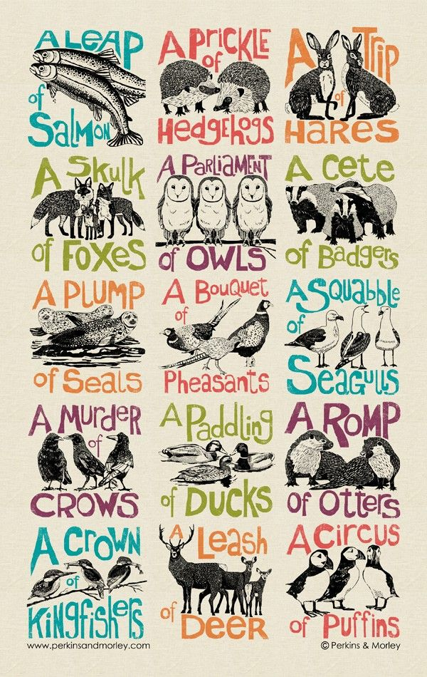 collective noun tea towel Collective nouns, Nouns