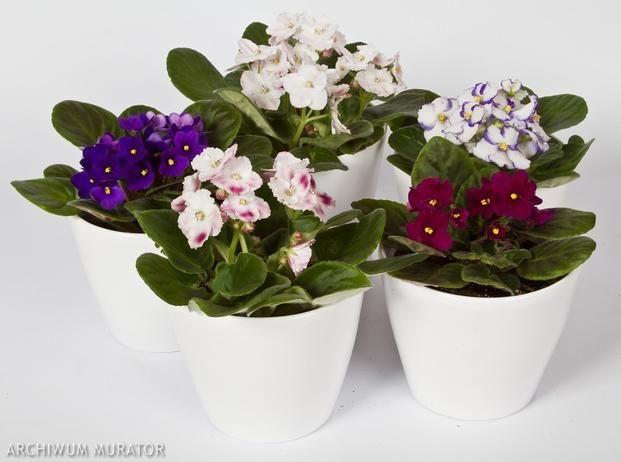 Kwiaty Doniczkowe Kwitnace Zima Zdjecia Kwiatow Plants Planters Planter Pots