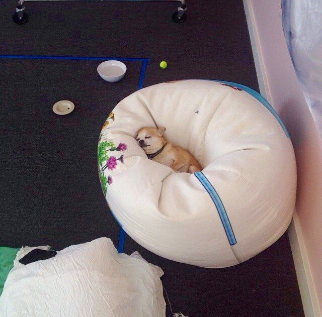 """""""She loves her new bed. ♥  It looks coz to me too. :-)"""