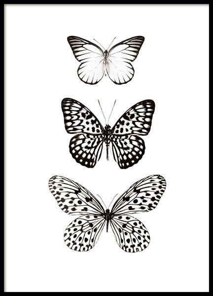 Three Butterflies Posters In 2020 Art Prints Quotes