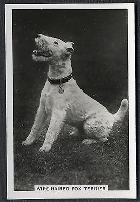 WIRE FOX TERRIER SENIOR SERVICE 1939 DOG PHOTO CIGARETTE / TOBACCO CARD in Collectibles, Animals, Dogs | eBay