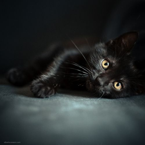 Magical Nature Tour Cute Black Cats Cute Black Kitten Black Cat