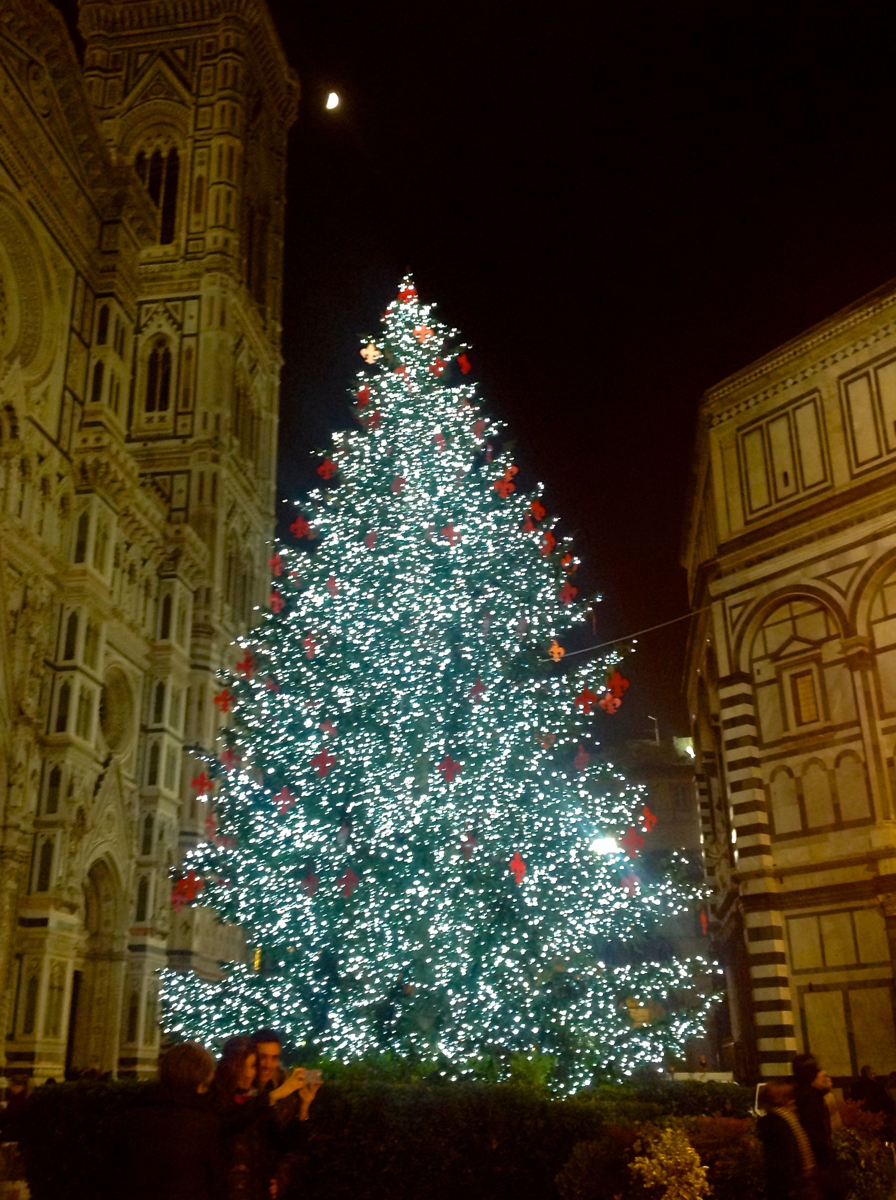 The huge #Christmas #tree in Piazza Duomo #Florence #decoration