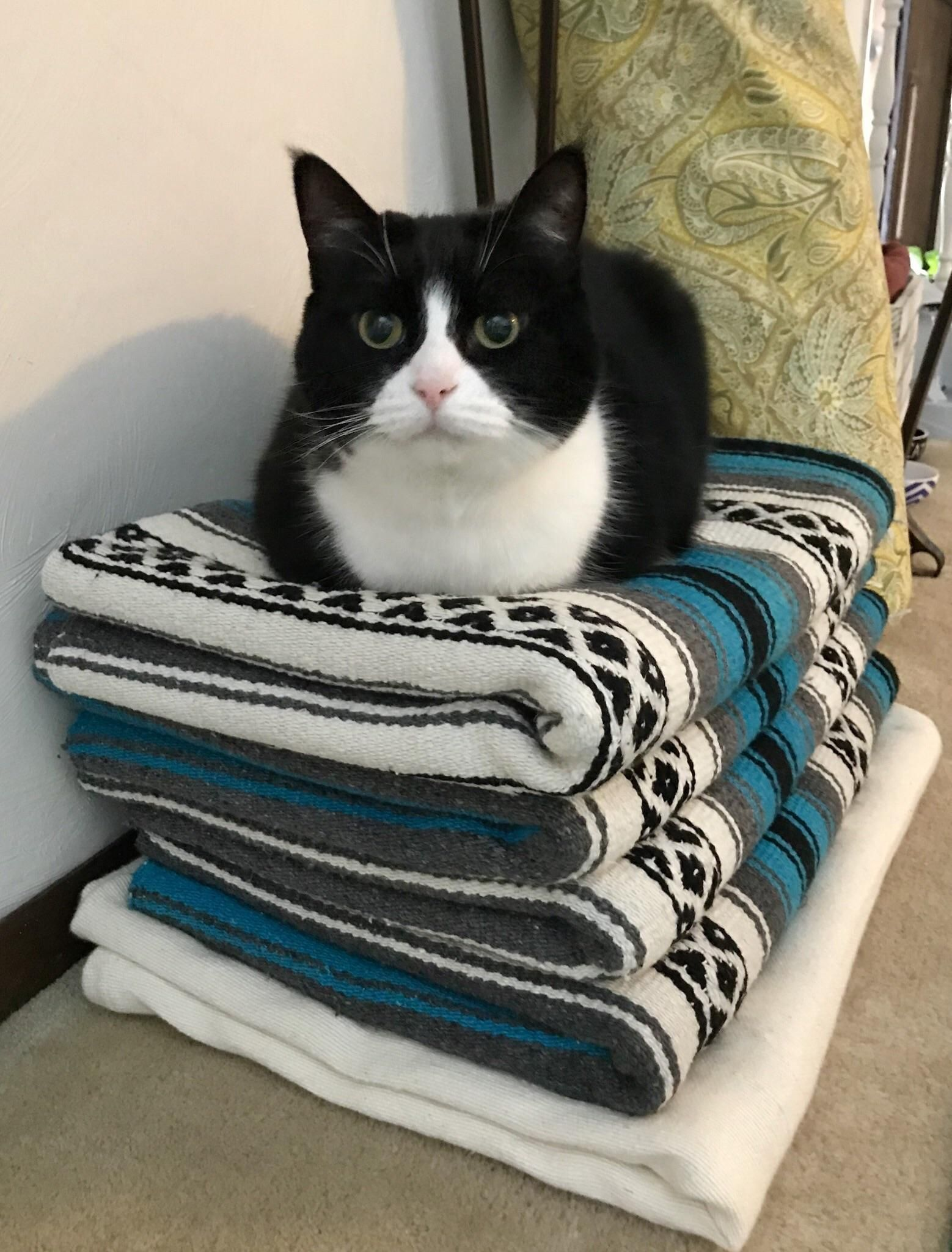 Her Name Is Penny And Shes My Penny Loaf I Redd It Submitted By Littlestlauren To R Catloaf 5 Comments Original F Cute Cats Kittens Cutest Beautiful Cats