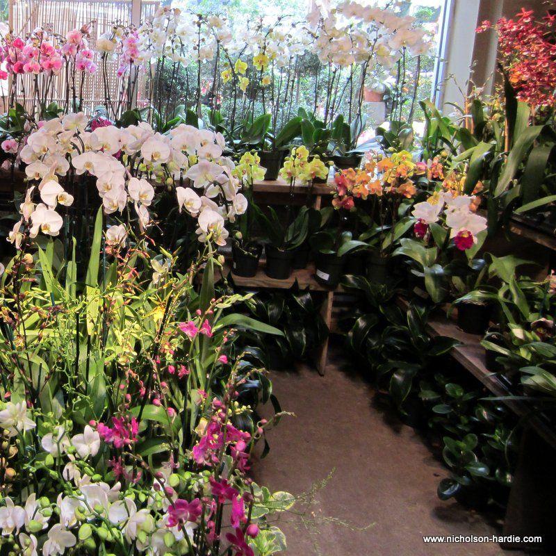 Nicholson Har Garden Nursery In