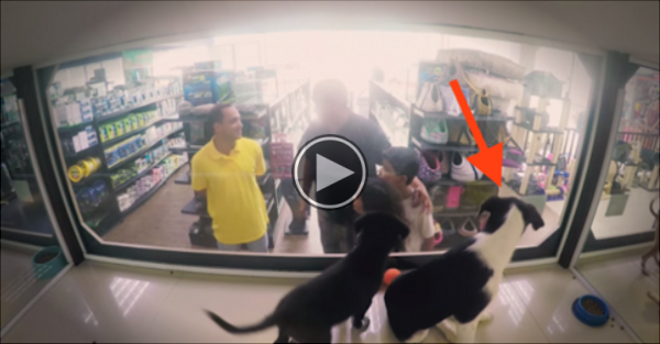Watch What Happens When A Pet Store Swaps Out Its Pets With Rescued Pets For Adoption Instead.