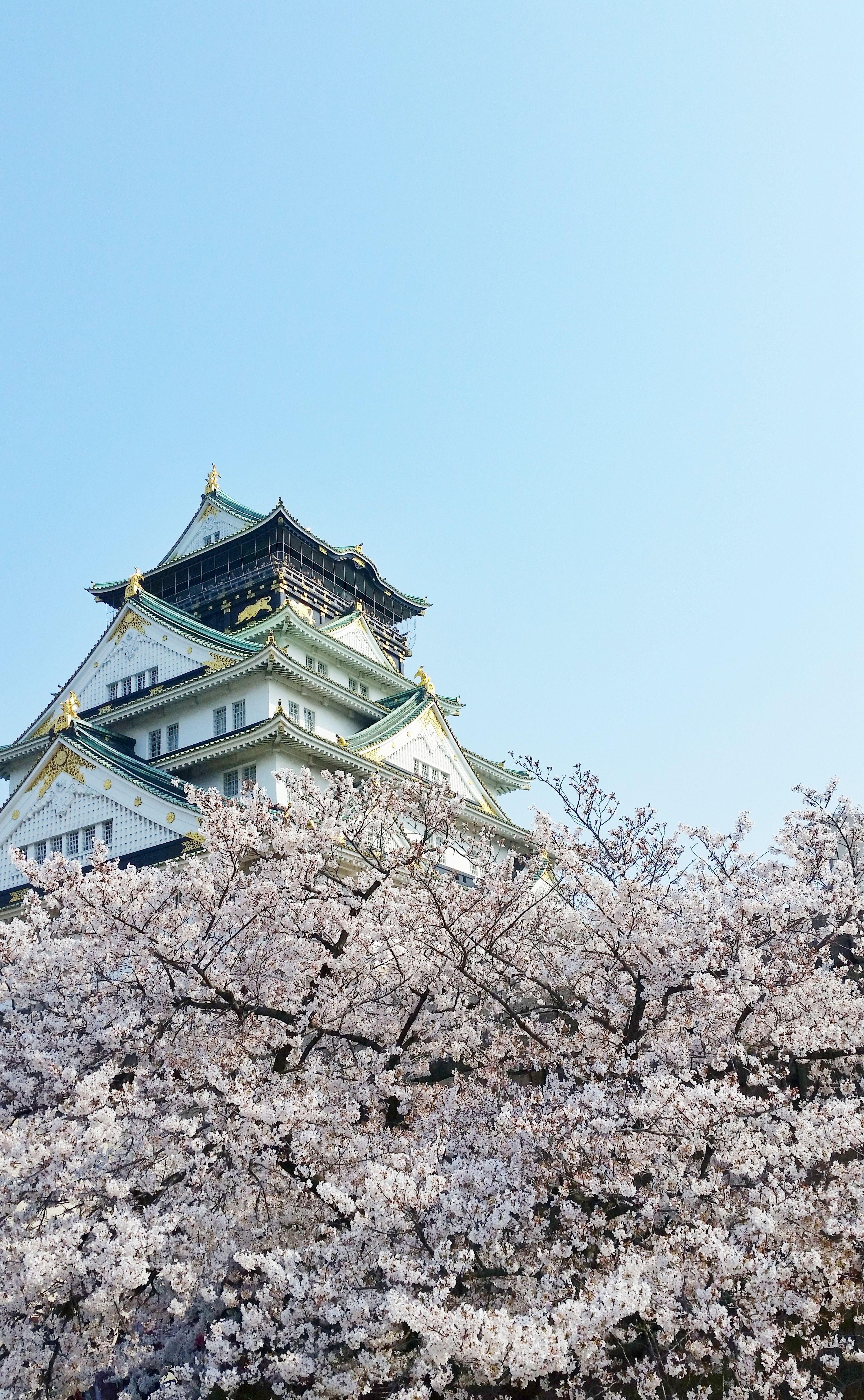 Perfect Osaka Castle Cherry Blossom Photo Spots Backpacking Japan Spring Travel Flashpacking Japan Japan Travel Photography Japan Travel Destinations Japan Itinerary
