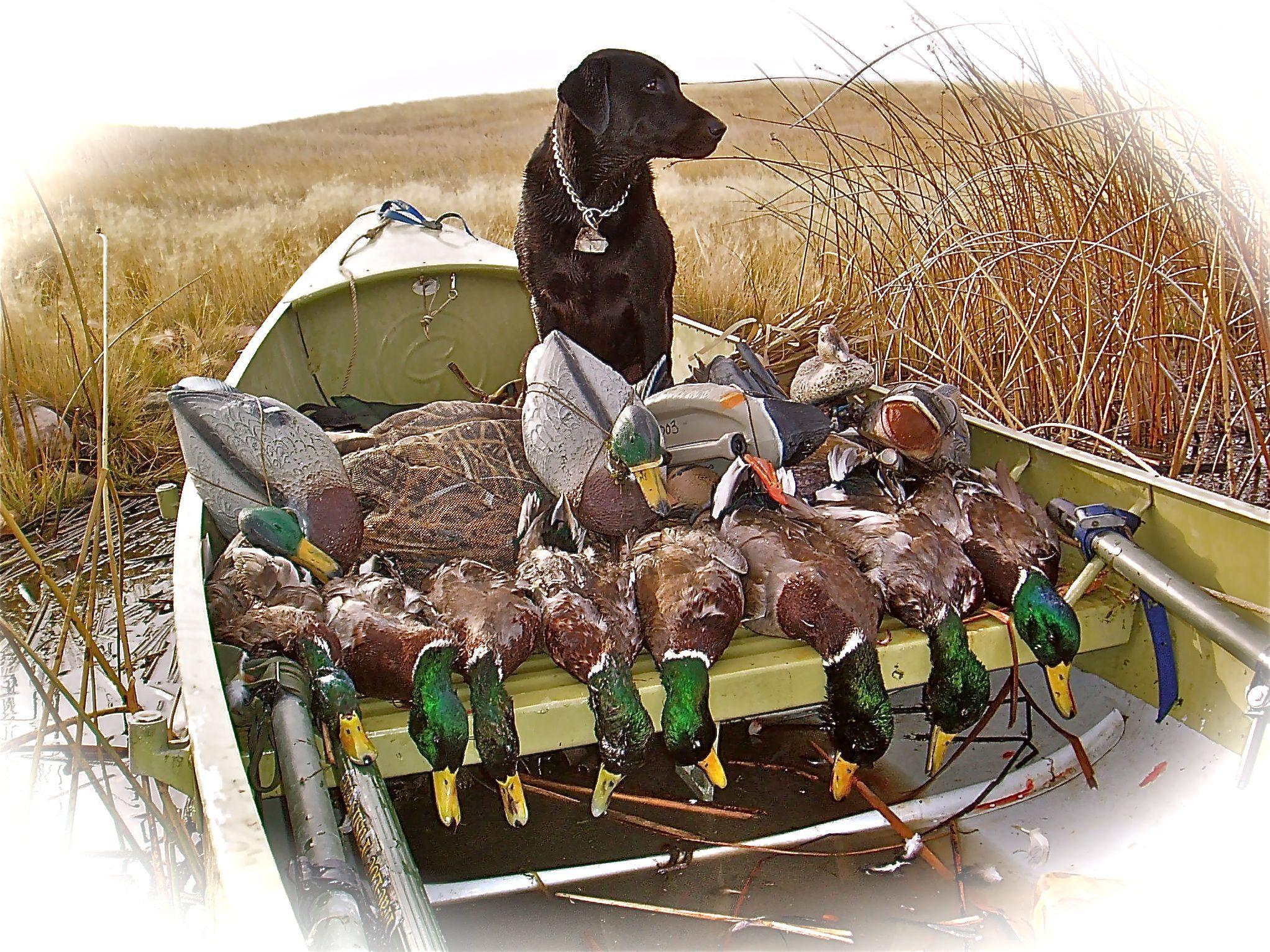 Grumman Sport Boat duck hunting   hunting   Sport boats