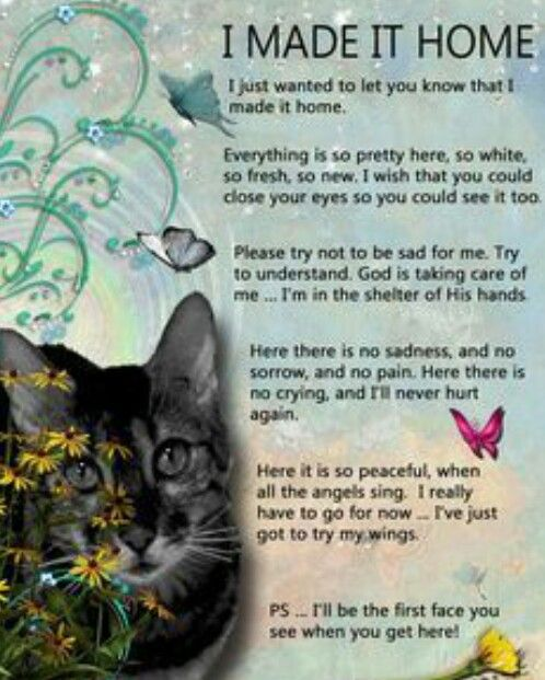 Animals Go To Heaven Too In Memory Of My Precious Buddy