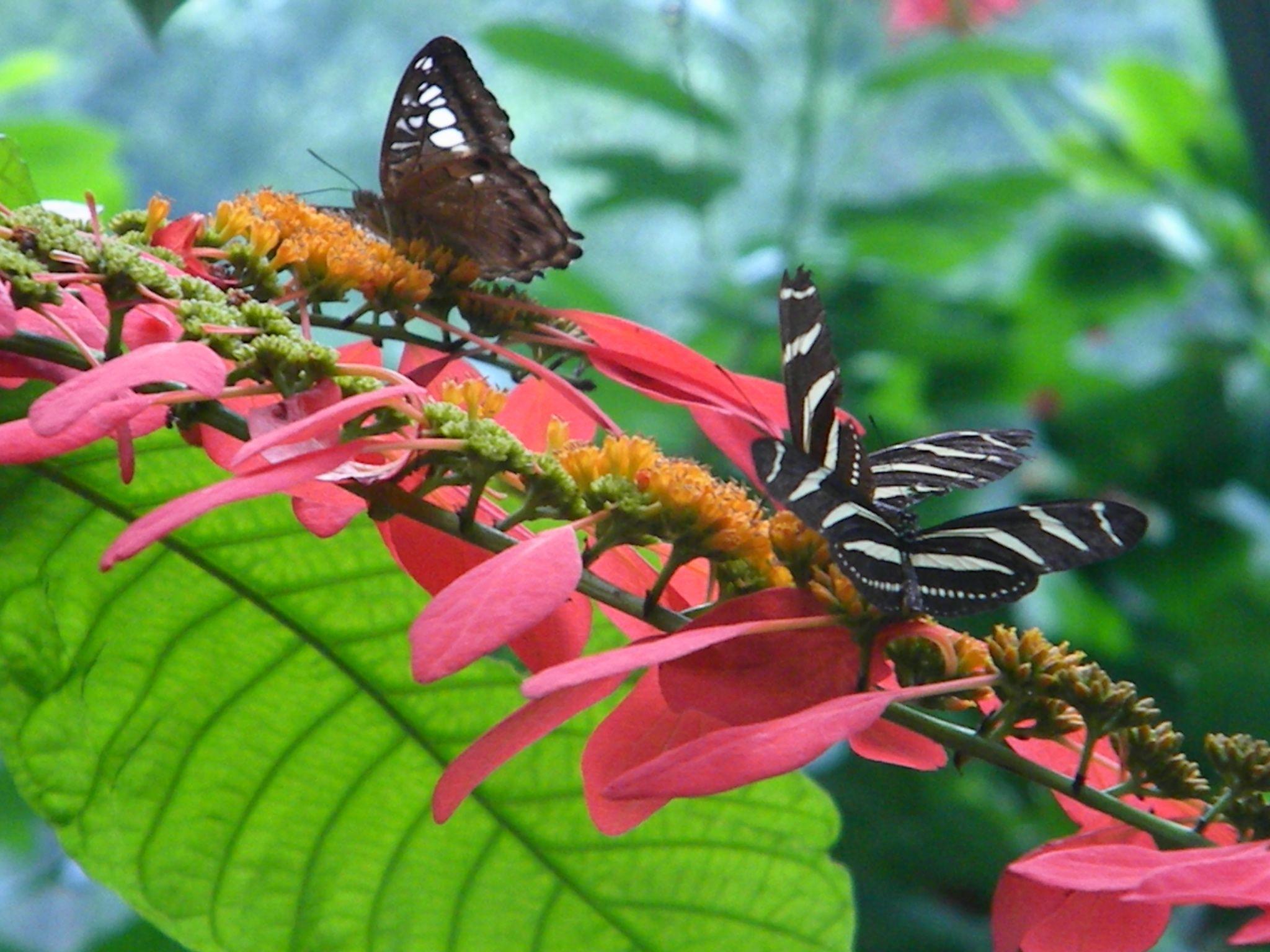 The Butterfly Garden In Houston, Texas