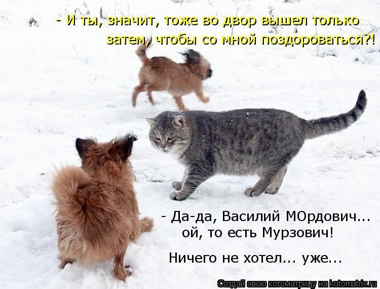 котенок похудел и ничего не ест