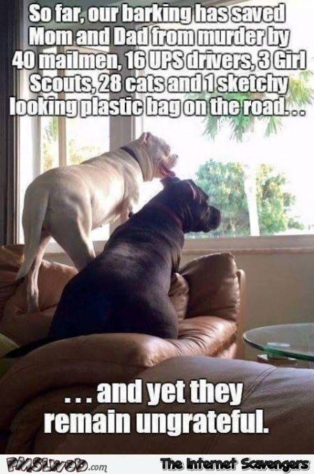 Ungrateful Humans Dog Meme Funny Dogs Funny Dog Memes Funny Animal Pictures