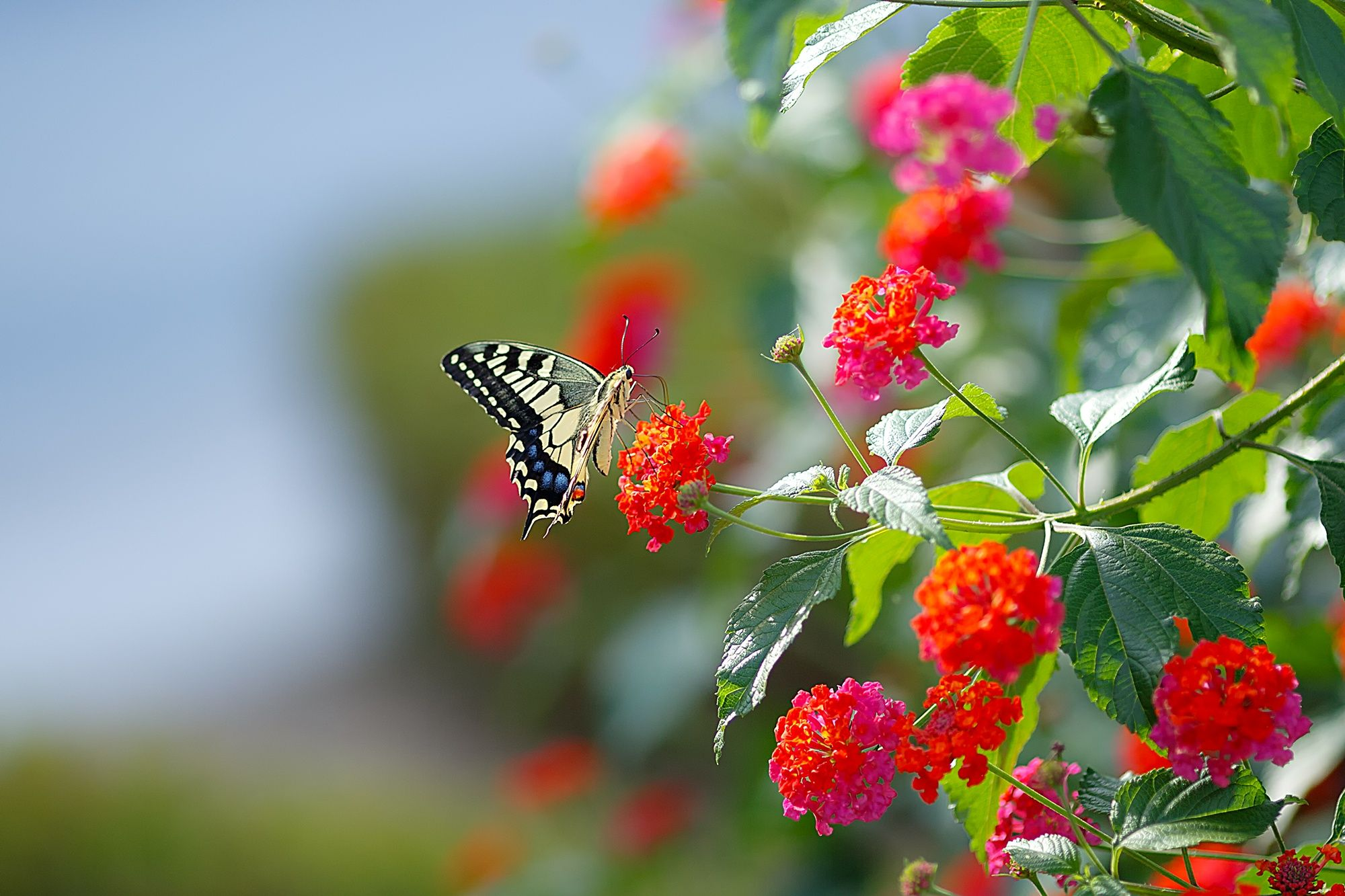 Butterfly u flower by seungki kim on px places to visit