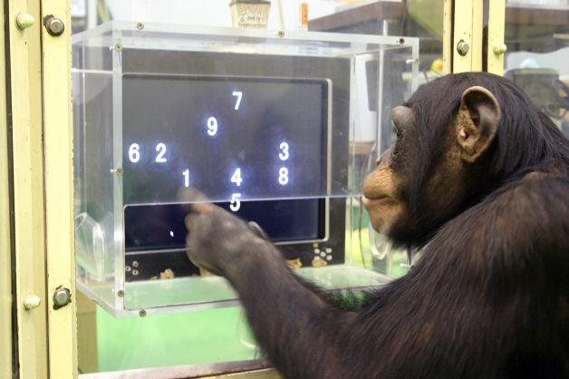 "Ch. 9: In this 2006 photo provided by the Primate Research Institute of Kyoto University, a 5 1/2-year-old chimpanzee named Ayumu performs a memory test w/ randomly-placed consecutive Arabic numerals, which are later masked, accurately duplicating the lineup on a touch screen computer in Kyoto, Japan. The young chimpanzees in the study titled ""Working memory of numerals in chimpanzees"" by Sana Inoue & Tetsuro Matsuzawa could memorize the nine numerals much faster & more accurately than…"