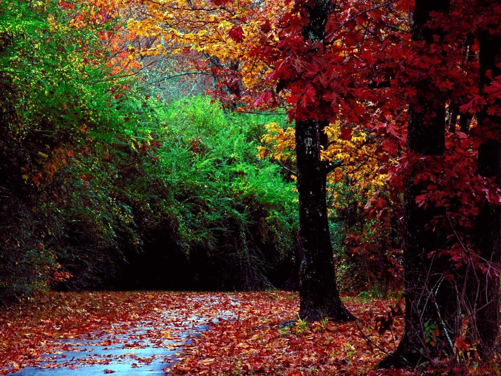 Natural Color...beautiful!   Color   Pinterest   Forest road, Autumn ...