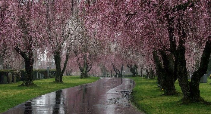 Pretty Path During An April Shower.