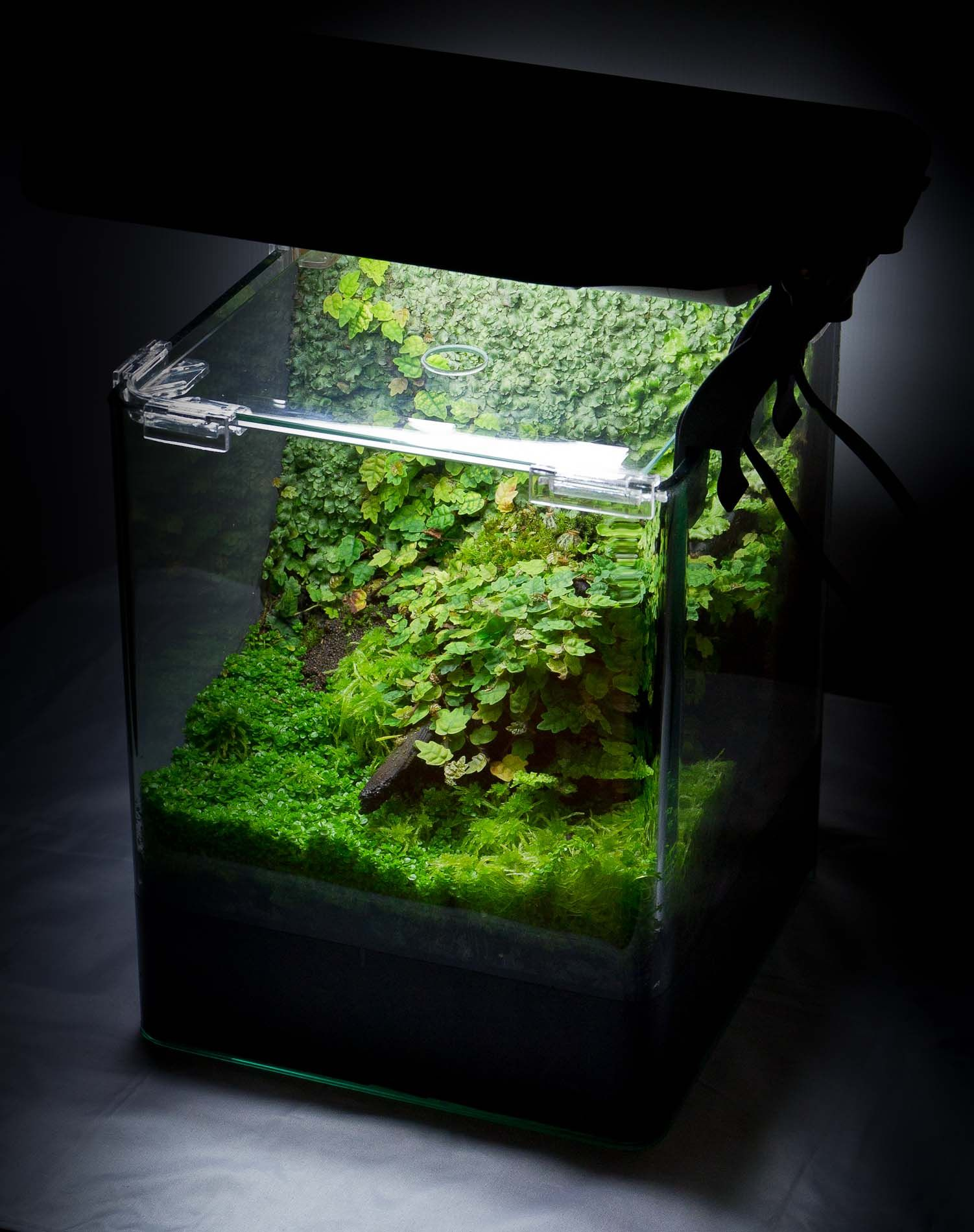 Small but naturally aquascaping pinterest vivarium aquarium