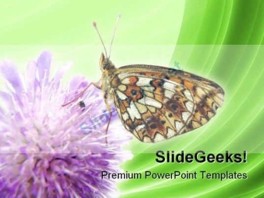 Butterfly Insect Nature PowerPoint Templates And PowerPoint - nature powerpoint template