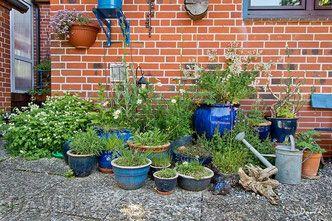Mit Wildstauden In Topfen Lassen Sich Reizvolle Und Okologisch Wertvolle Ecken Im Garten Gestalten Naturgarten Wildlife Garde Naturgarten Garten Privatgarten