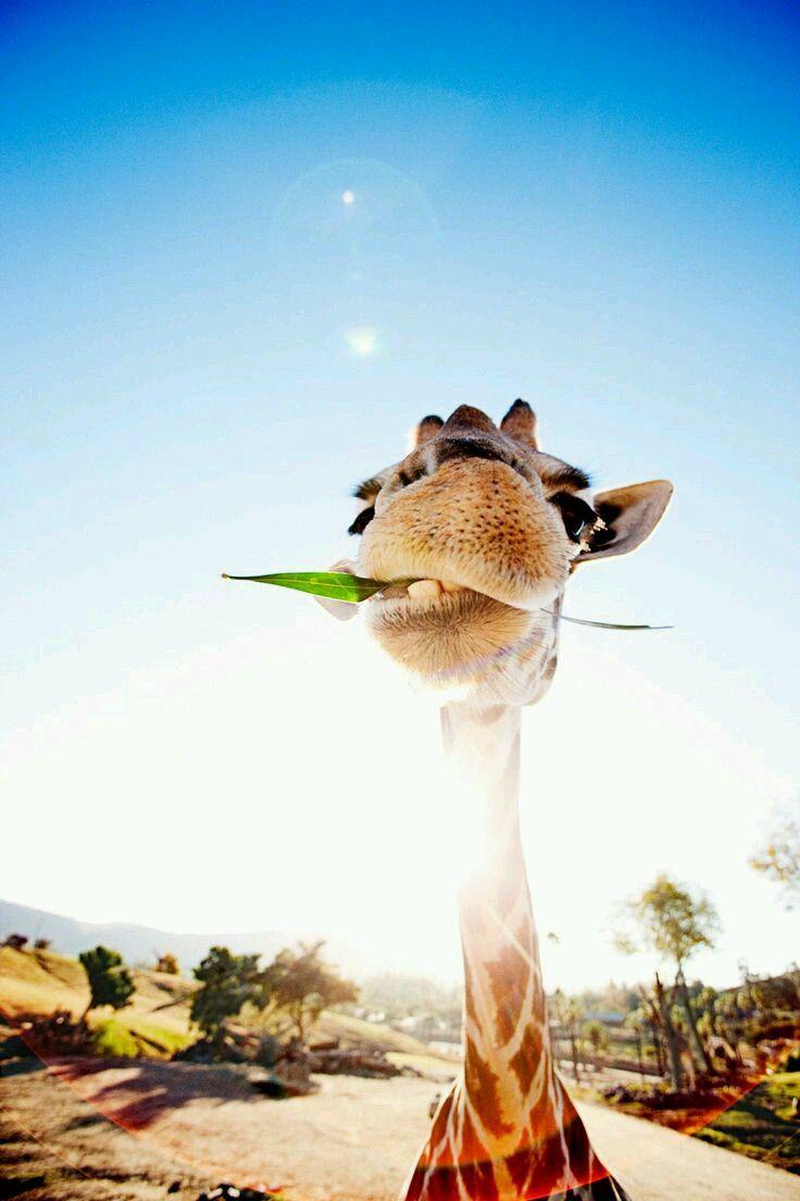 Les 25 meilleures id es de la cat gorie giraffe neck sur for L art minimaliste