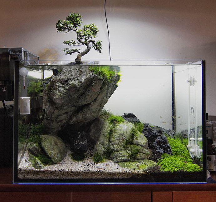 Aquarium, Amazing Aquariums