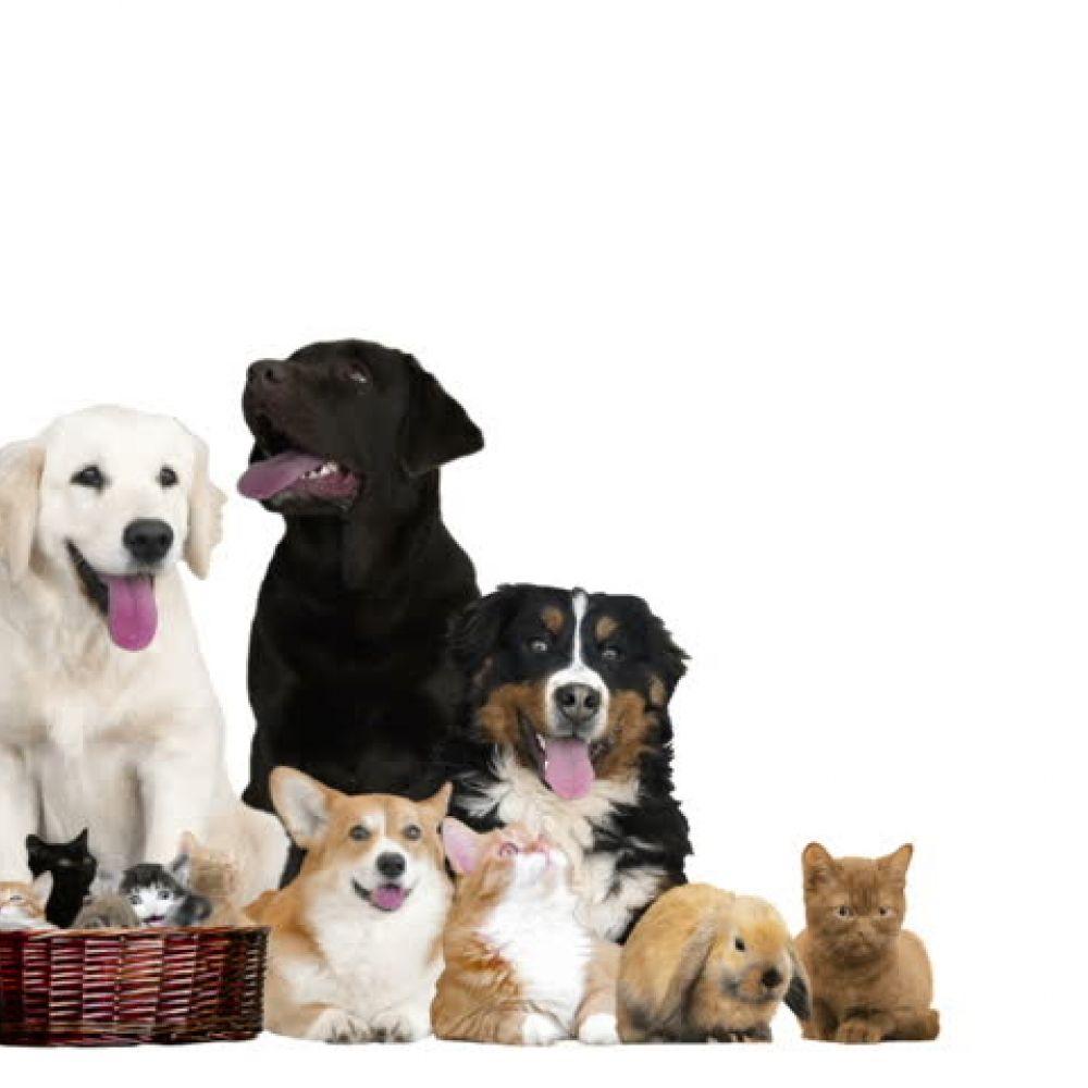Buy The Best Stuff For Your Pets Online Pets Online Pets Your Pet