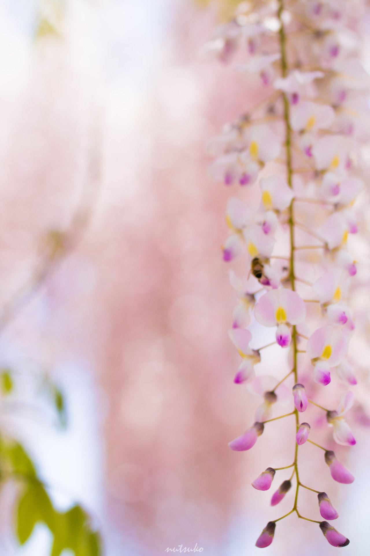 MACROPHOTOGRAPHY WISTERIA BEE