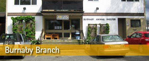 Bc Spca Burnaby Branch In Burnaby British Columbia Http Www Spca Bc Ca Branches Burnaby Http Www Canadian Animals Animal Rescue Shelters British Columbia