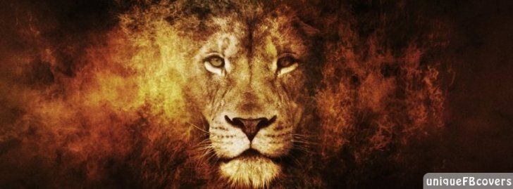 Lion Facebook Covers Animales Fb Cover Facebook Covers