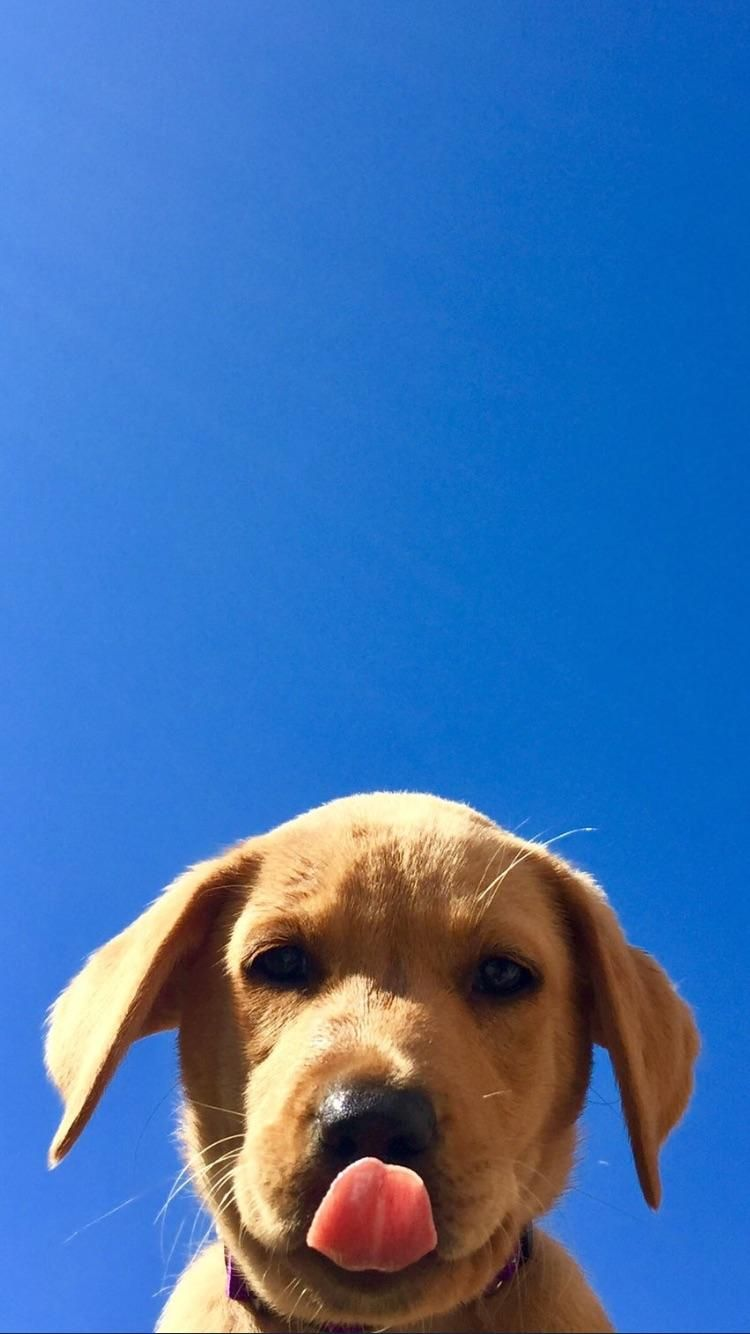 Sky Pup Cute Dog Wallpaper Dog Wallpaper Dog Wallpaper Iphone